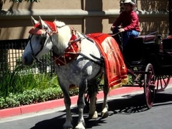 Carriage and white horse rental for Indian weddings