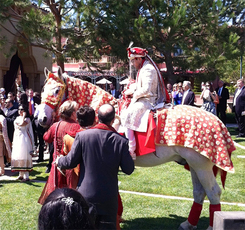 White horse rental for Indian Wedding San Diego